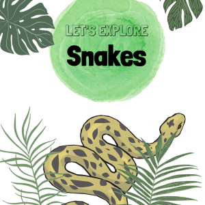 Lets explore Snakes project
